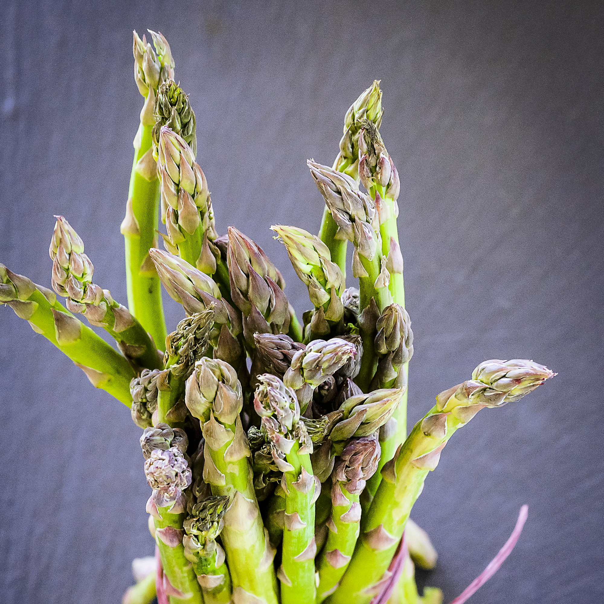 Asparagus - Caro Blackwell Photography