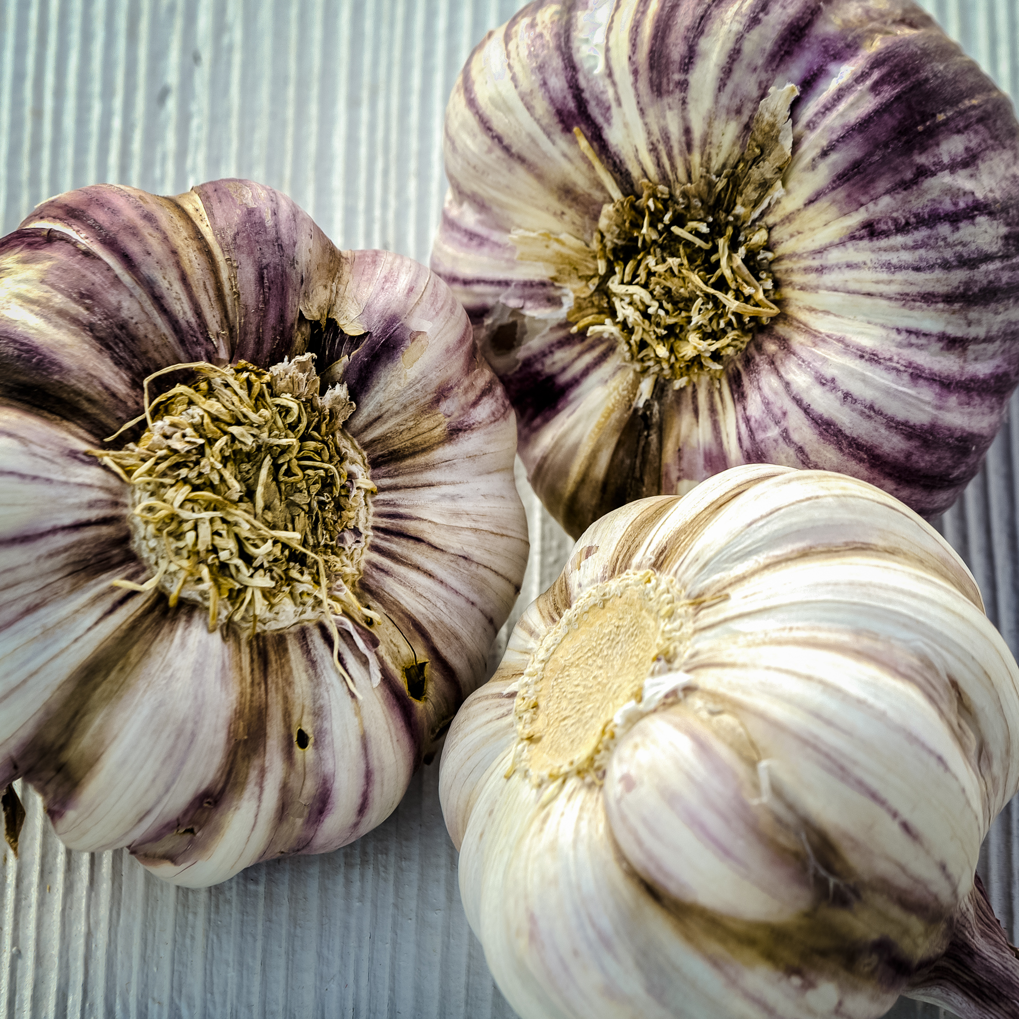 Garlic - Caro Blackwell Photography